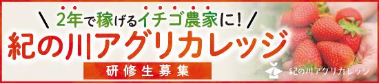 2年で稼げるイチゴ農家に! 紀ノ川アグリカレッジ研修生募集